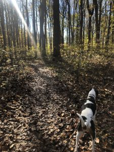 dog in woods